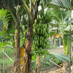 crop-vege-growing1-1