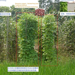 organic-growing-processing-1-.1